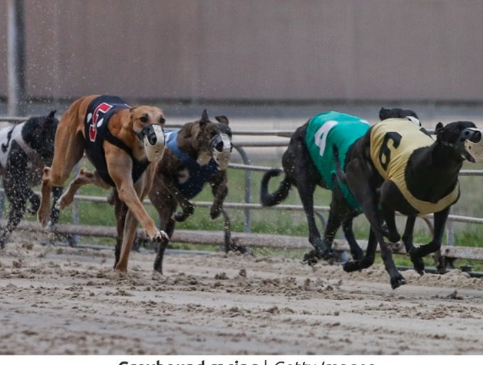 Keeneland replaces horses with dogs for the 2021 fall season