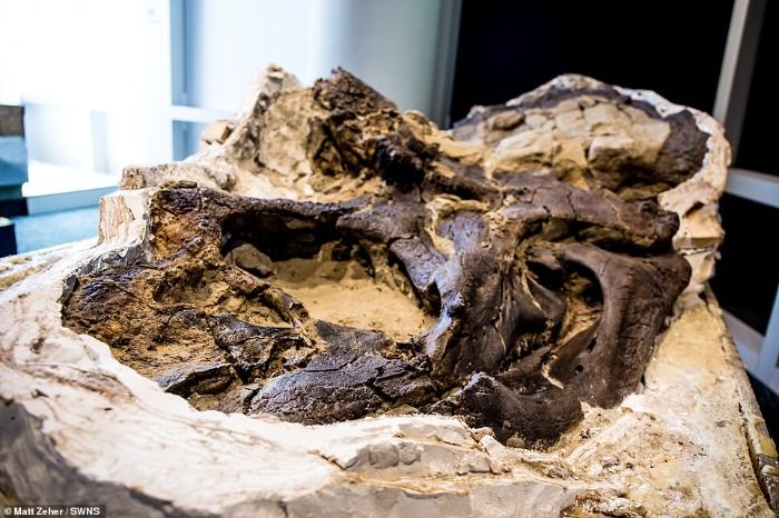 T-Rex Fossils Found on University of Kentucky Campus
