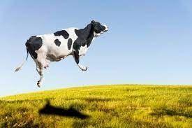 Vacas volando en PR