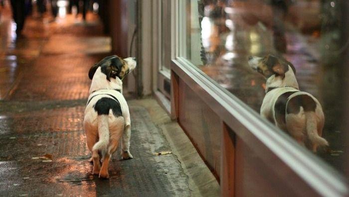 Los perros se escapan por que no estan felices.