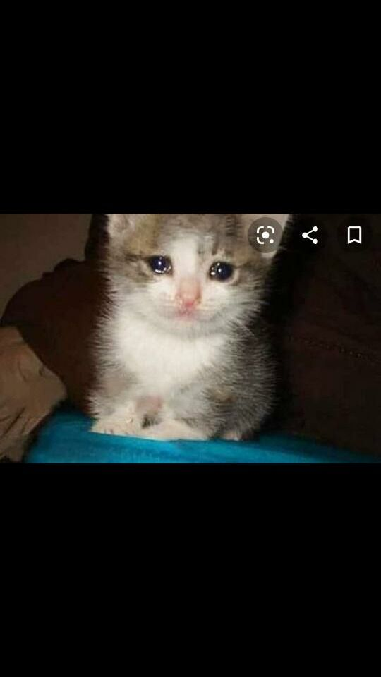 Ultimo momento, Gato se deja de mover por culpa de un Tal salva